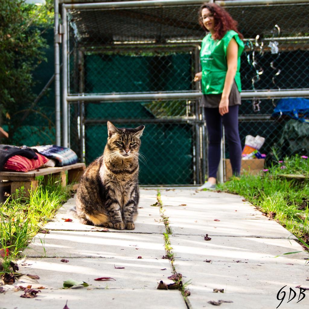 gattile oasifelina pesaro